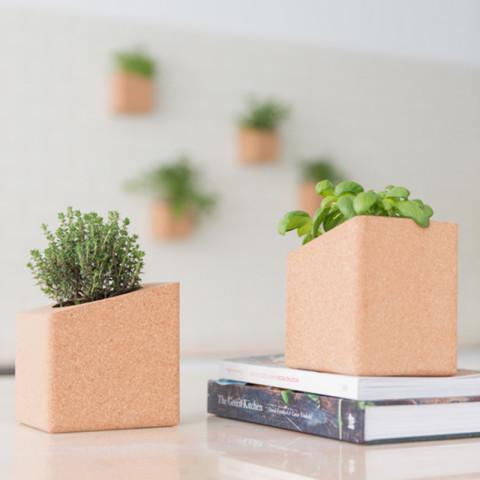 LIB038-2_Grow-Cube-pinheiro_life_in_a_bag_Lusa_Mater